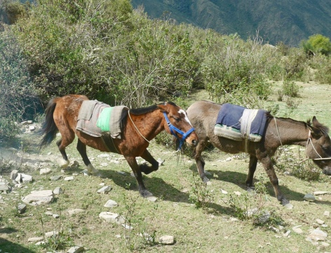 The mules that would carry our supplies between the lodges